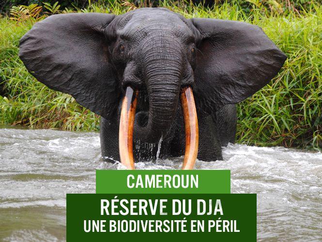 Ecotourisme : plus de 22 sites touristiques en péril dans la région de l'Est