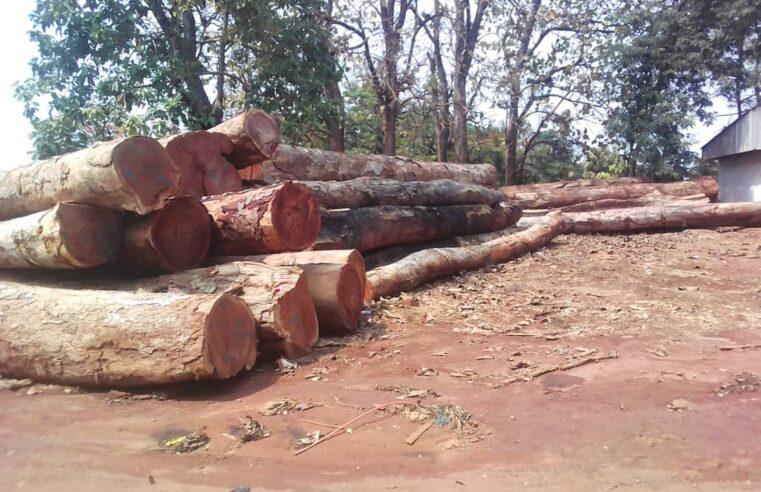 Exploitation illicite : Plus d'une centaine de grumes saisies en 4 mois à Mbitom
