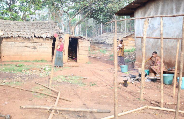 Covid-19 : Les minorités Baka de l'Est malades de la « pandémie » économique