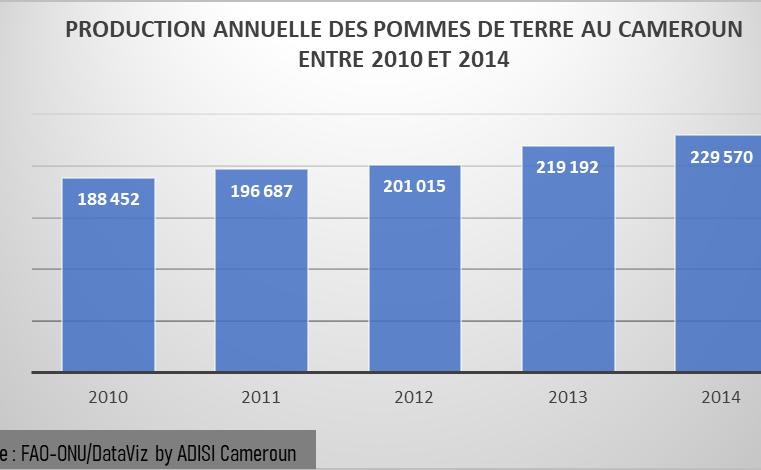 Adamaoua : la production de pomme de terre passe de 29 à 12 tonnes par hectare.