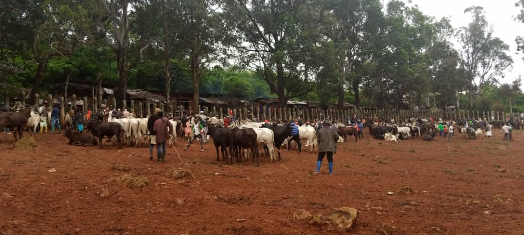 North West: The crisis has forced farmers to abandone farm lands